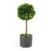 Boxwood Ball Topiary in Black Pot