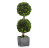 Double Boxwood Ball Topiary in Square Pot