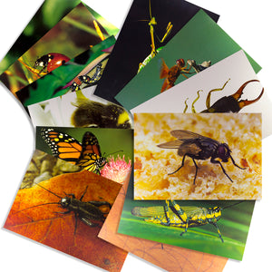 Animals and Insects Posters Mega Set