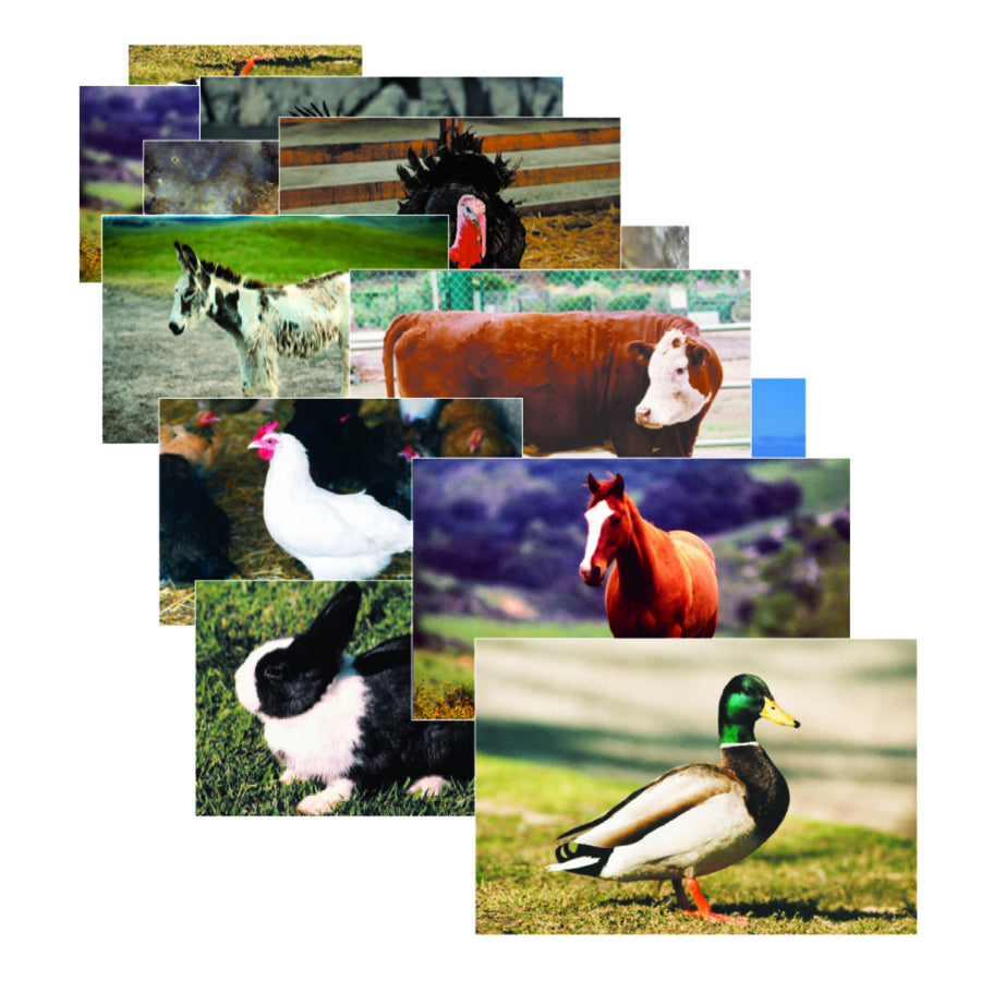 Farm Animals Poster Set