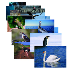 Bird Picture Posters for language development