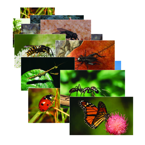 Insects & Bugs Posters
