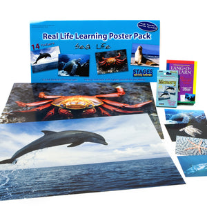 Sea Life Learning Kit