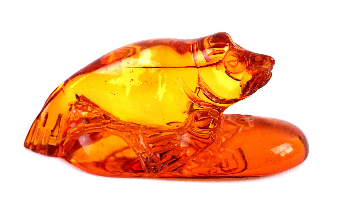 40 million year old Amber