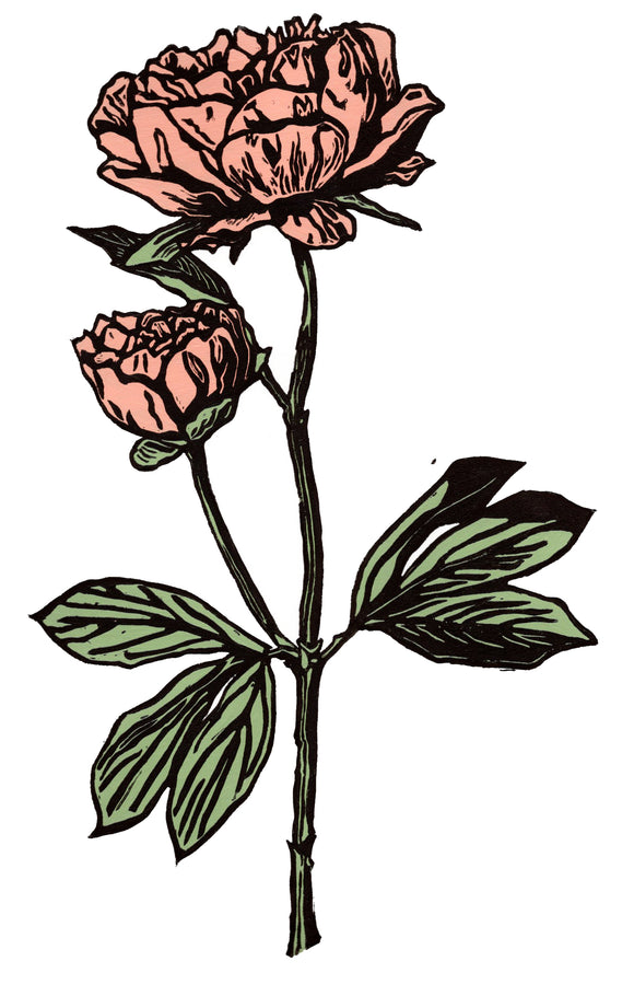 'Peony in Pink' Limited Edition Original Linocut
