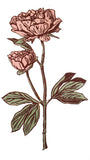 A print of my original handprinted linocut 'Peony in pink'.