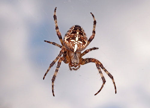 Stuttering Therapy Resources Blog Image Spider Desensitization
