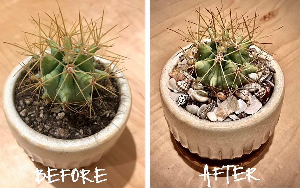 Before  /  After Images of Plant Decorating with Sea Shells