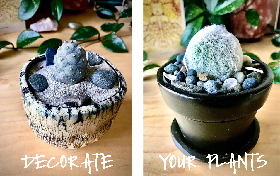 Decorate Your Plants