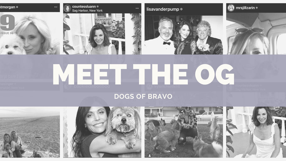Meet the OG Dogs of Bravo