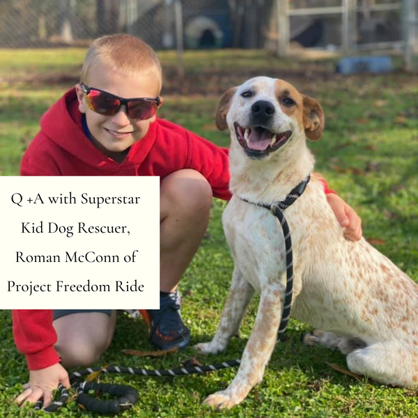 Q +A with Superstar Kid Dog Rescuer, Roman McConn of Project Freedom Ride