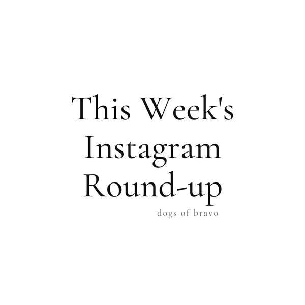 This Week's Instagram Round-up | Dogs of Bravo