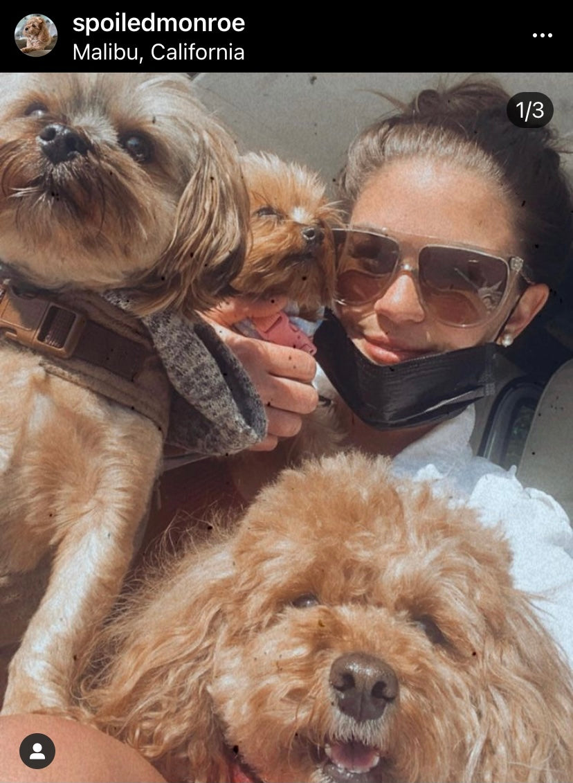 Brittany Cartwright with her dogs Monroe, Kingsley and Sophie