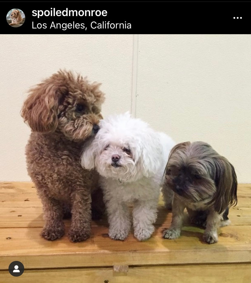 Brittany Cartwrights Dogs Monroe and Kingsley with Stassis dog Luda