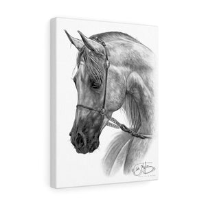 Horse drawing Art print 'Colt Yearling' Fine art canvas