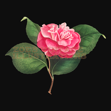 Load image into Gallery viewer, FREE - Camellia Vintage Illustration | Camellia Clipart 3717x3717 px
