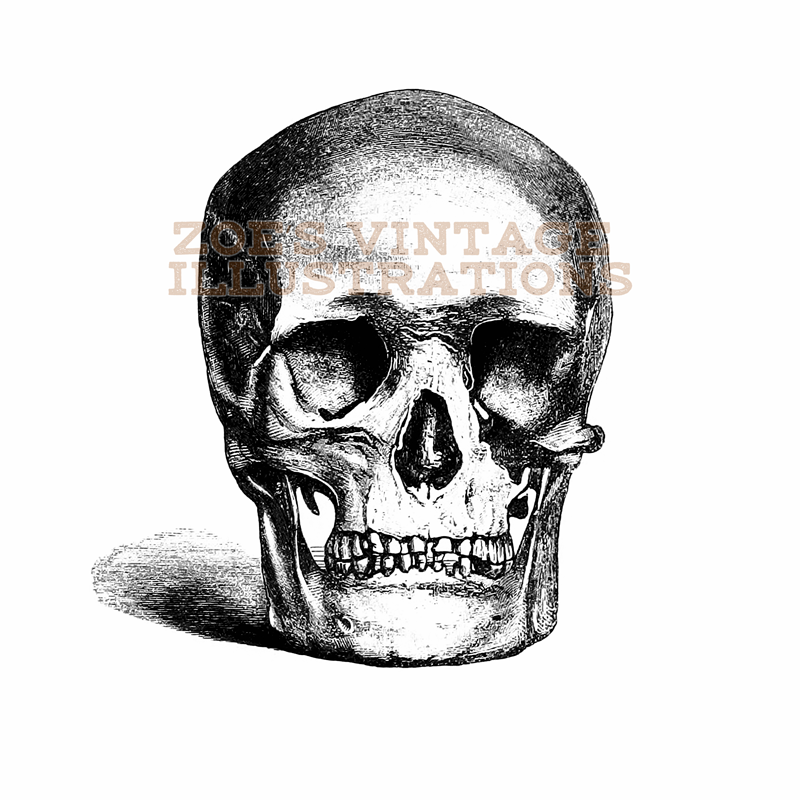 FREE - Skull Vintage Illustration, Black and White
