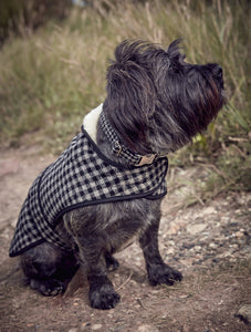 Beautiful Dog Jacket