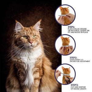 8 Month Flea & Tick Prevention Collar for Cats dog Mosquitoes Repellent Collar Insect Mosquitoes
