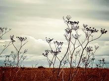 Load image into Gallery viewer, WILD FENNEL ON ALDEBURGH BEACH -  30cm x 40cm