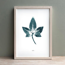 Load image into Gallery viewer, Ivy Mounted Botanical Print (Unframed)