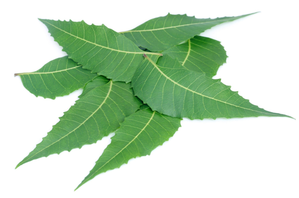 Seekanapalli Organic Neem Leaves (200g) Unflavoured Herbal Tea Pouch  (200 g)