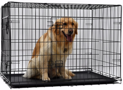 yellow lab dog in a large iron crate