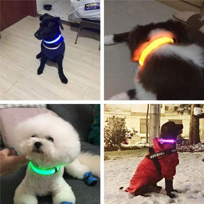 USB Rechargeable Dog or Cat LED Flashing Collar Leash