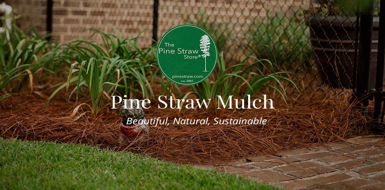 The pIne Straw Store, Pine Needle Mulch, Pine Straw Mulch, Pine Straw, Pine Straw New York, Pine Straw Michigan, Pine Straw Pennsylvania, Pine Straw Maryland, Pine Straw New Jersey, Pine Straw New York