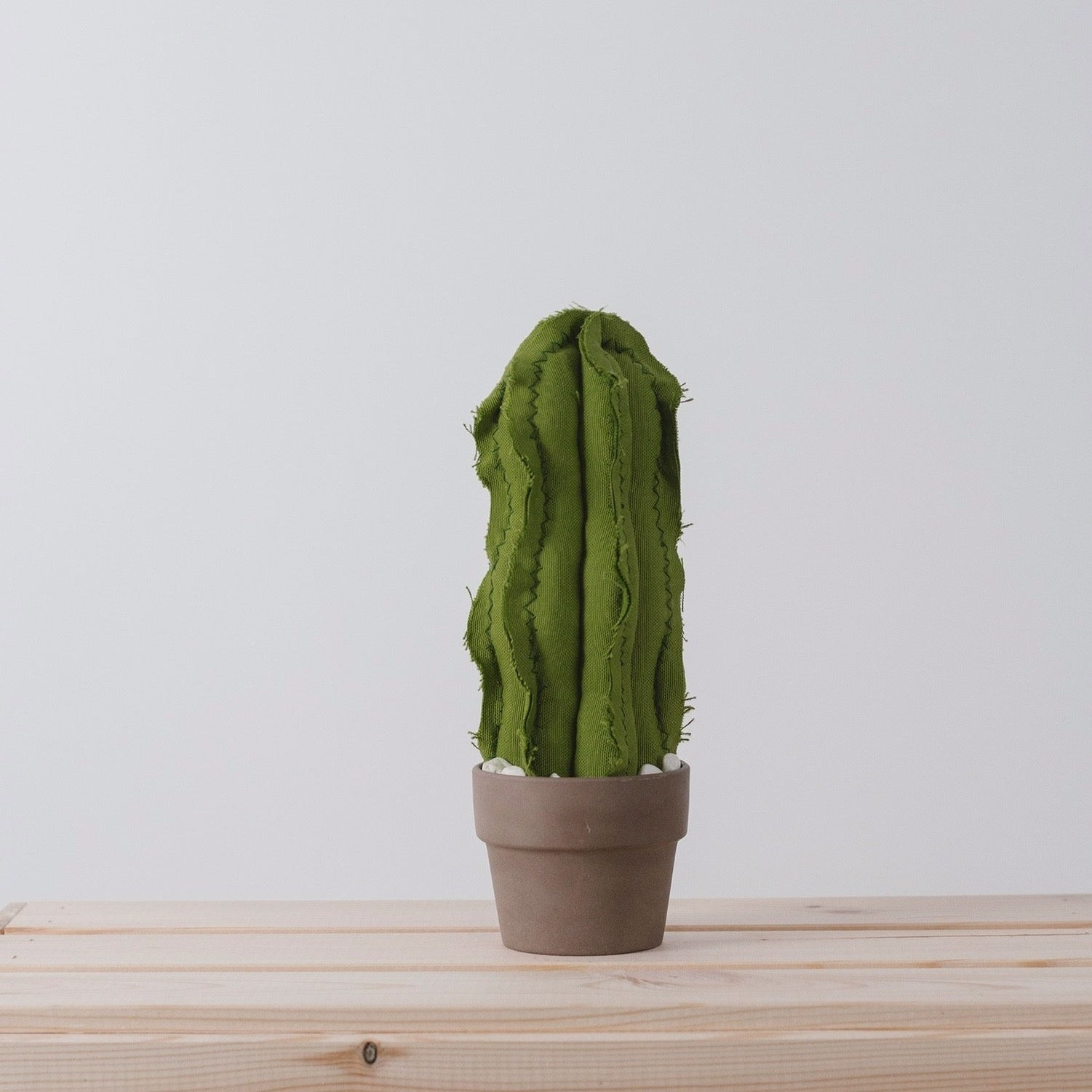 Medium Wavy Column Cactus