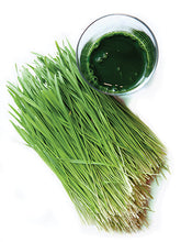 Load image into Gallery viewer, Wheatgrass Seeds 1lb