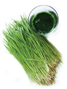 Wheatgrass Seeds 1lb