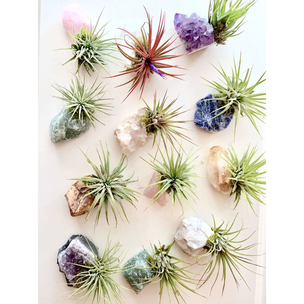 Crystal Air Plants l Zen Garden l