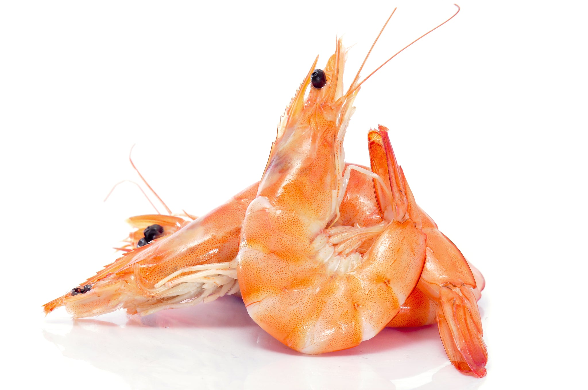 gre>Rainforest - Shrimp (16/20) 1.5lbs