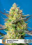 Sweet Seeds Sweet Cheese XL Auto®