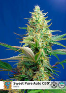 Sweet Seeds Sweet Pure Auto CBD®