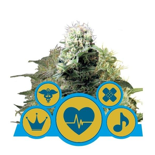 Royal Queen Seeds Medical Mix
