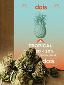 Brands_DOIS, cbd, CBD Products, Cbweed, Dois, Mary, Peso_5 g, Prodotti cbd, Tropical, Tropical Cheese - doisgrowshop.it