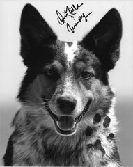 Jumpy's Pawtographed 8X10 (3) Black and White profile