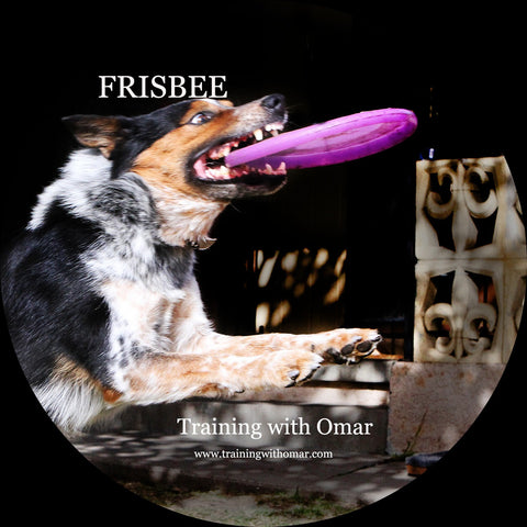 "Training ""The Frisbee"" DVD Video"