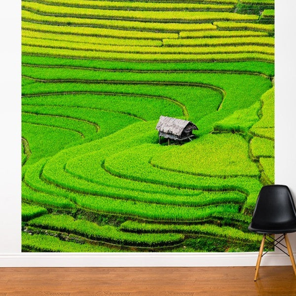 ADzif Fresk Rice Field 8ft x 8ft