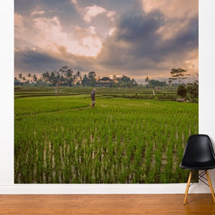 ADzif Fresk Bali Rice Field 8ft x 8ft
