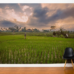 ADzif Fresk Bali Rice Field 10ft x 8ft