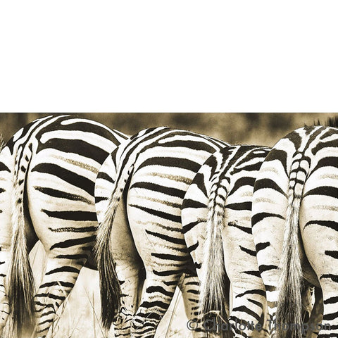 Zebra Bottoms