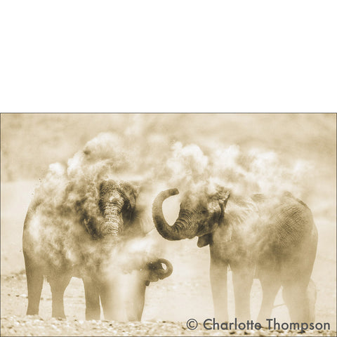 Dusty Elephants
