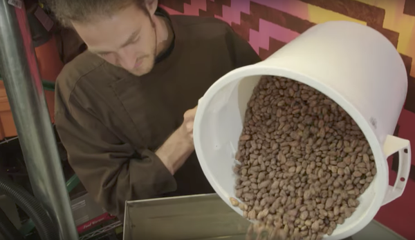 person pouring cacao beans into a winnower