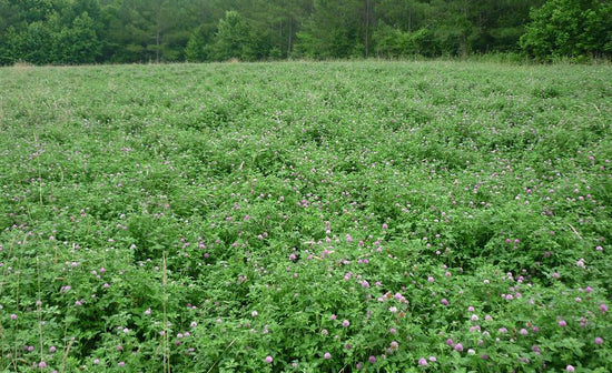 WHY FOOD PLOTS?