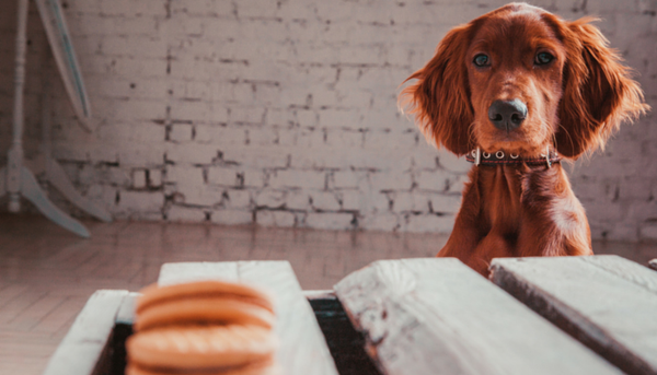 Foods You Should NEVER Be Feeding Your Dog