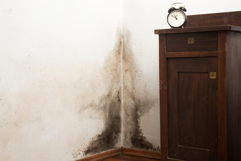 Keeping your Top End home mould free