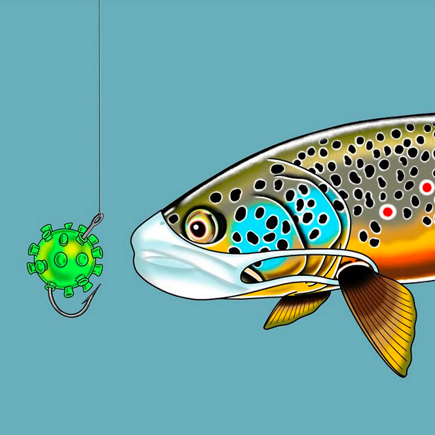 Covid Trout Sticker - Drew Wilson